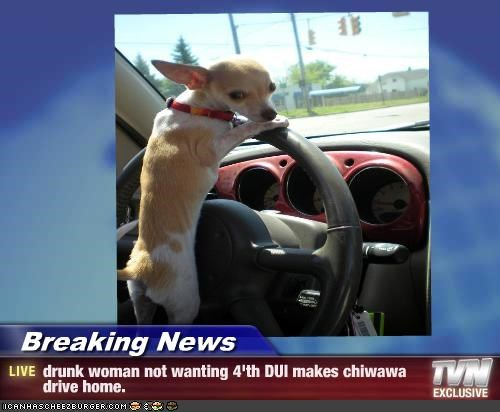 Breaking News Drunk Woman Not Wanting 4 Th Dui Makes Chiwawa