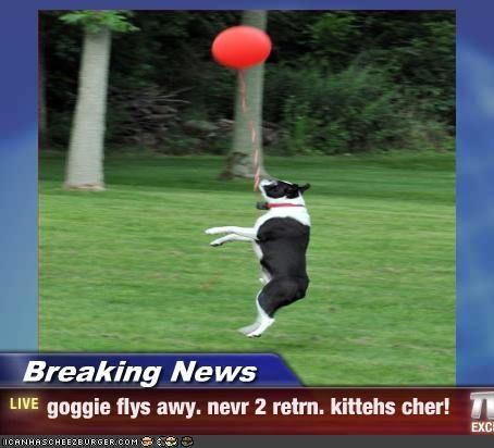 Cheezburger Image 2555592704