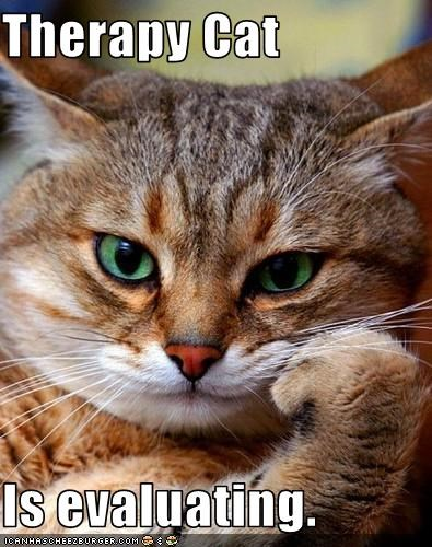 Therapy Cat Is evaluating. - Cheezburger - Funny Memes | Funny ...