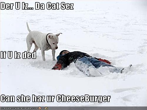 Cheezburger Image 2556888576