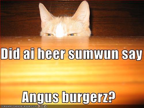 Cheezburger Image 2557314560