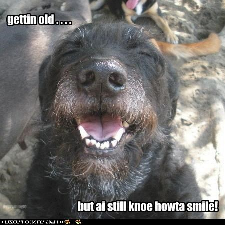 face old scottish terrier smile sweet - 2557650688