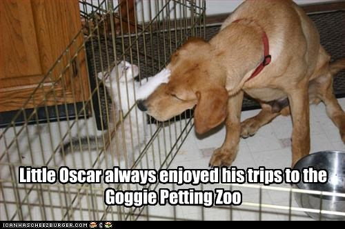 Cat named Little Oscar scratches a dog as he is petting him, so to speak.
