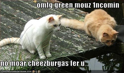 Cheezburger Image 2558570240
