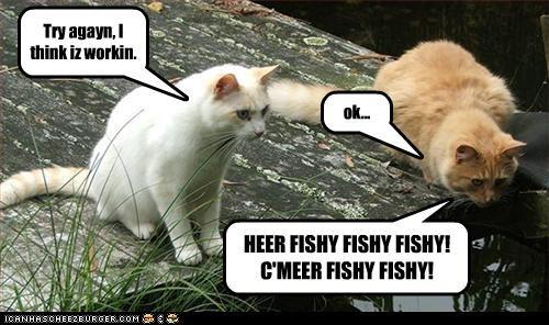 Try agayn, I think iz workin. ok... HEER FISHY FISHY FISHY! C'MEER FISHY FISHY!