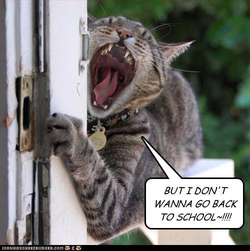 do not want school wah