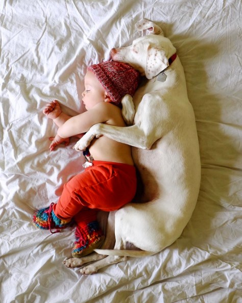 a story about a abusive dog named nora and finding her way to a loving family forever home and becoming best friends with their youngest newborn son Archie.