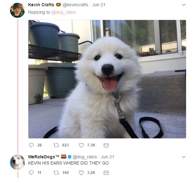Funny Dog selfies on Twitter