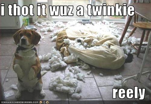 beagle bed destruction food shredding - 2561655040