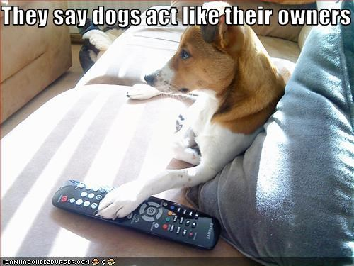 act couch lazy owner remote control TV whatbreed - 2561988096