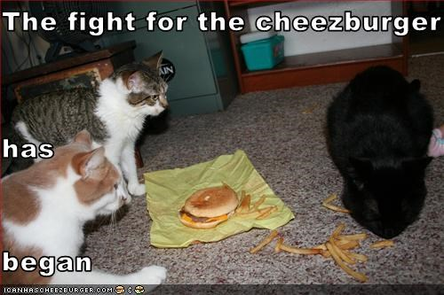 Cheezburger Image 2563375360