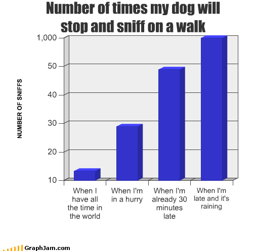 Bar Graph,dogs,hurry,late,raining,sniff,stop,walk