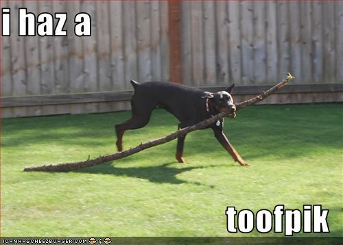 big,branch,doberman,fetch,toothpick