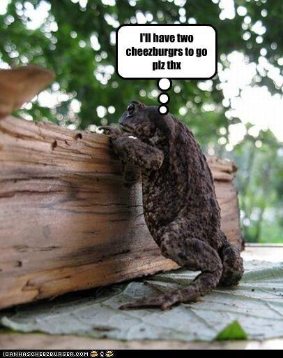 Cheezburger Image 2564311296