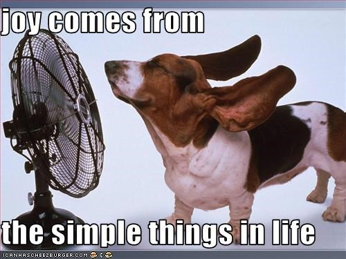 basset hound breeze fan floppy ears Joy life simple wind