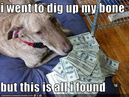bone digging greyhound mixed breed money - 2564512256