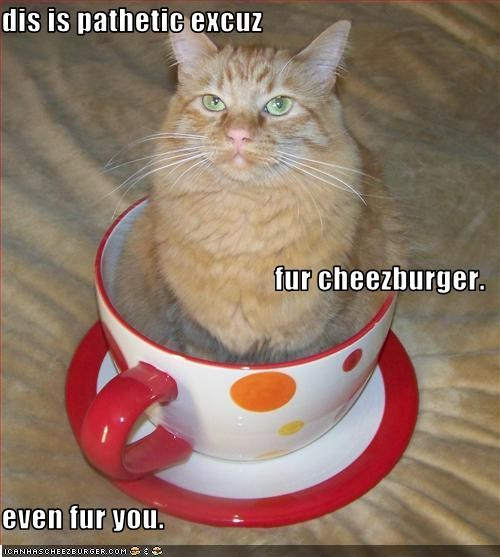 Cheezburger Image 2564944384