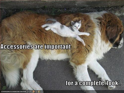accessories,kitten,saint bernard,stretch