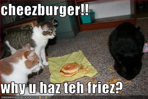 Cheezburger Image 2566598656