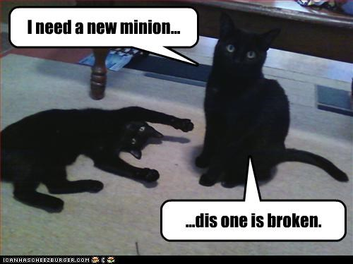 basement cat borked minion want