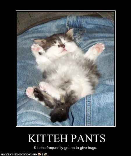 kitteh pants cheezburger funny memes funny pictures