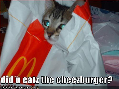 Cheezburger Image 2568183040