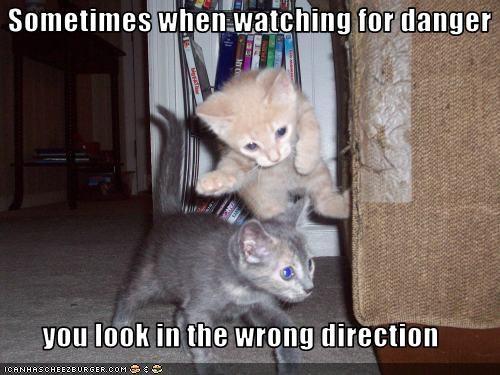cute danger kitten uh oh - 2568216576