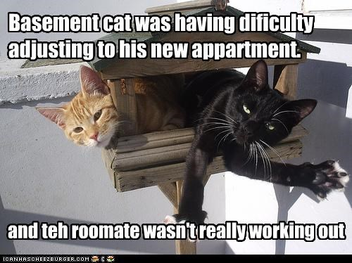 apartment,basement cat,do not want
