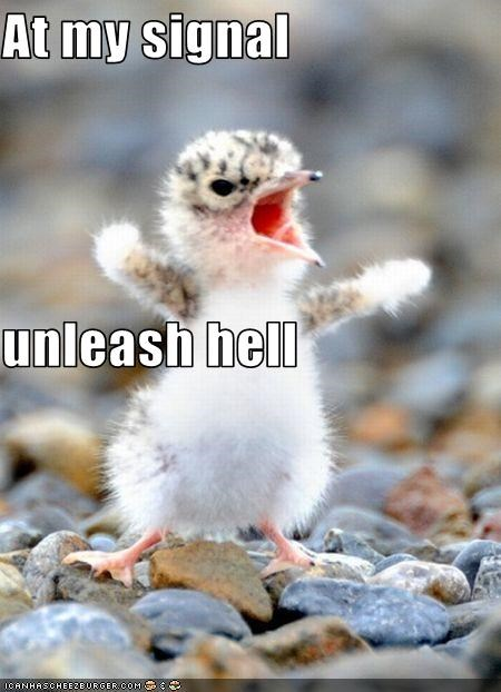 At my signal unleash hell - Cheezburger - Funny Memes | Funny Pictures