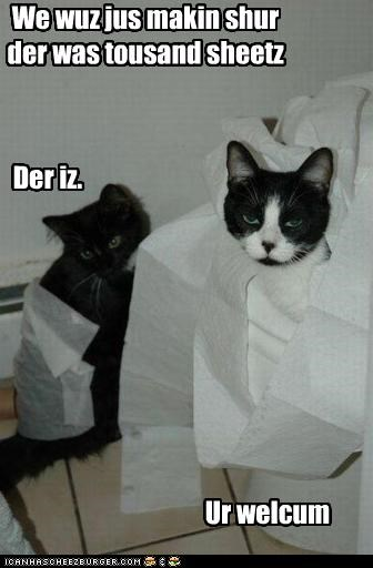 bad cat,counting,destruction,mess,toilet paper