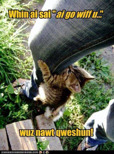 climbing cute kitten - 2569581824