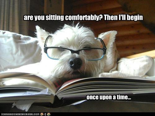 book glasses reading sit story west highland white terrier - 2570174464