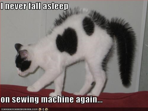 I Never Fall Asleep On Sewing Machine Again Cheezburger Funny