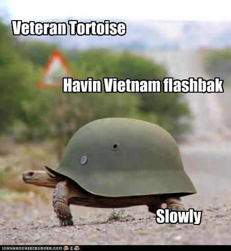 Slowly Havin Vietnam flashbak Veteran Tortoise