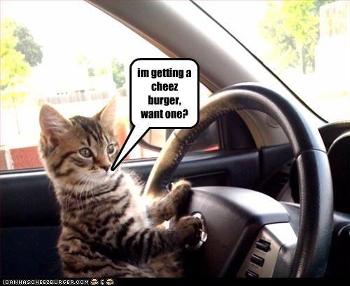 Cheezburger Image 2576001792