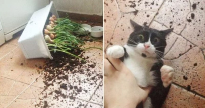 cat gets caught knocking over a plant and looks shocked