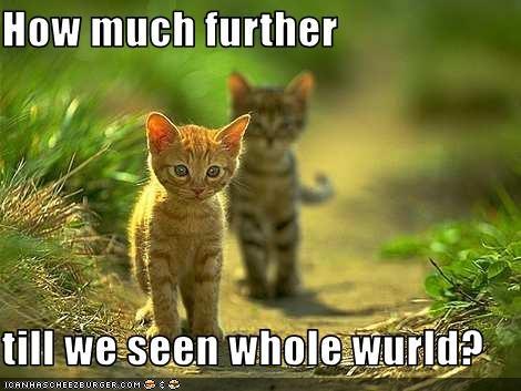 cute kitten walking - 2579792128