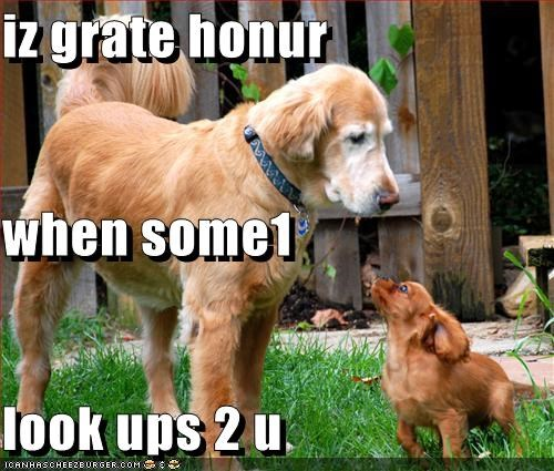 big giant golden retriever honor little look tiny up - 2581288960