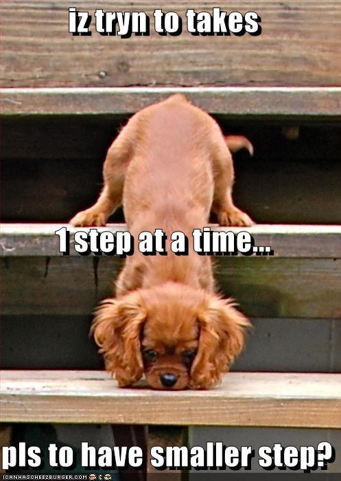 cocker spaniel help small steps - 2581321472