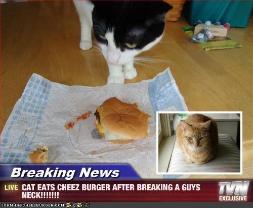 Cheezburger Image 2581504000