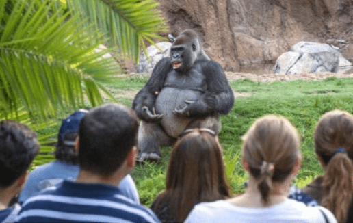 a photo of a gorilla giving a TED lecture created online meme craze
