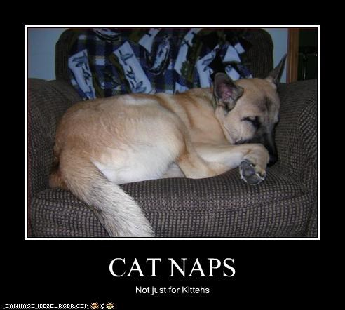 sleep lolcats chair german shepherd naps - 2581762816
