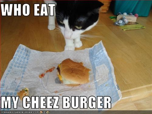 Cheezburger Image 2581875968