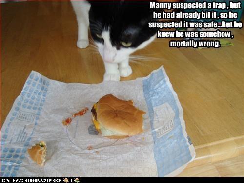 Cheezburger Image 2581942784