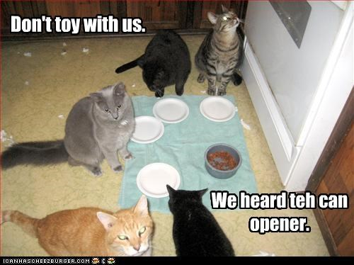 Don't toy with us. We heard teh can opener. Don't toy with us. We heard teh can opener.