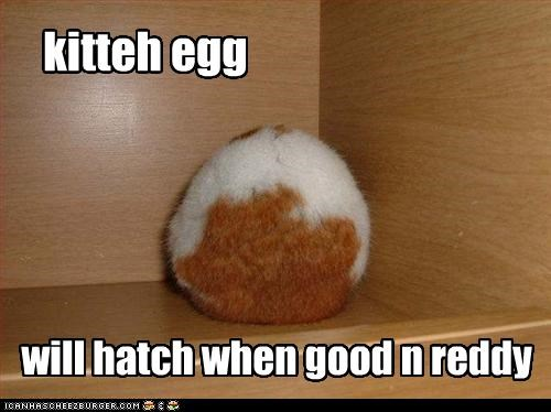 kitteh egg will hatch when good n reddy