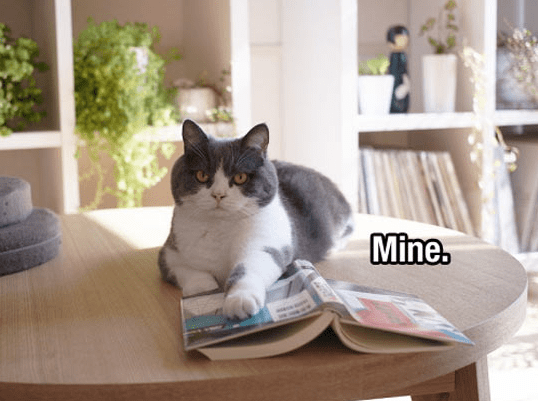 a funny meme of a cat sitting on the table and touching a book saying mine - cover for a list about different proverbs regarding cats