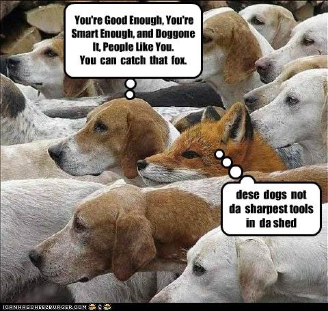 You're Good Enough, You're Smart Enough, and Doggone It, People Like You. You can catch that fox. dese dogs not da sharpest tools in da shed