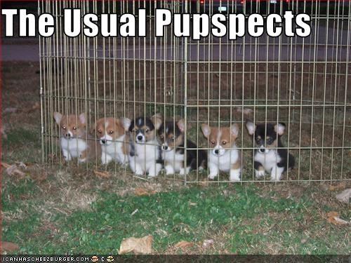 cage,corgi,group,puppies