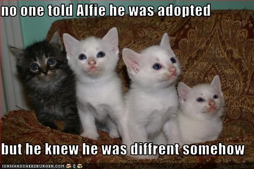 no one told Alfie he was adopted  but he knew he was diffrent somehow